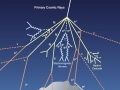 Мюон или антимюон рождается в паре с мюонным антинейтрино или нейтрино